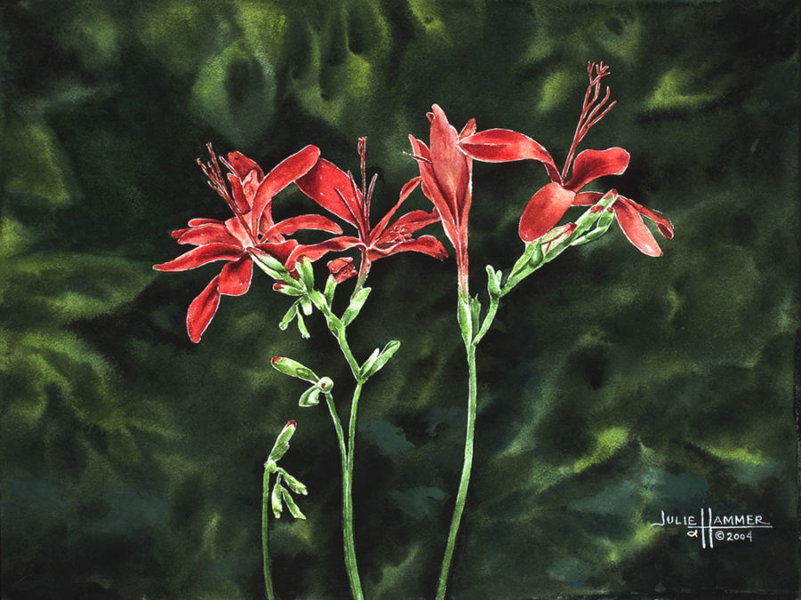 Red Candy Lily