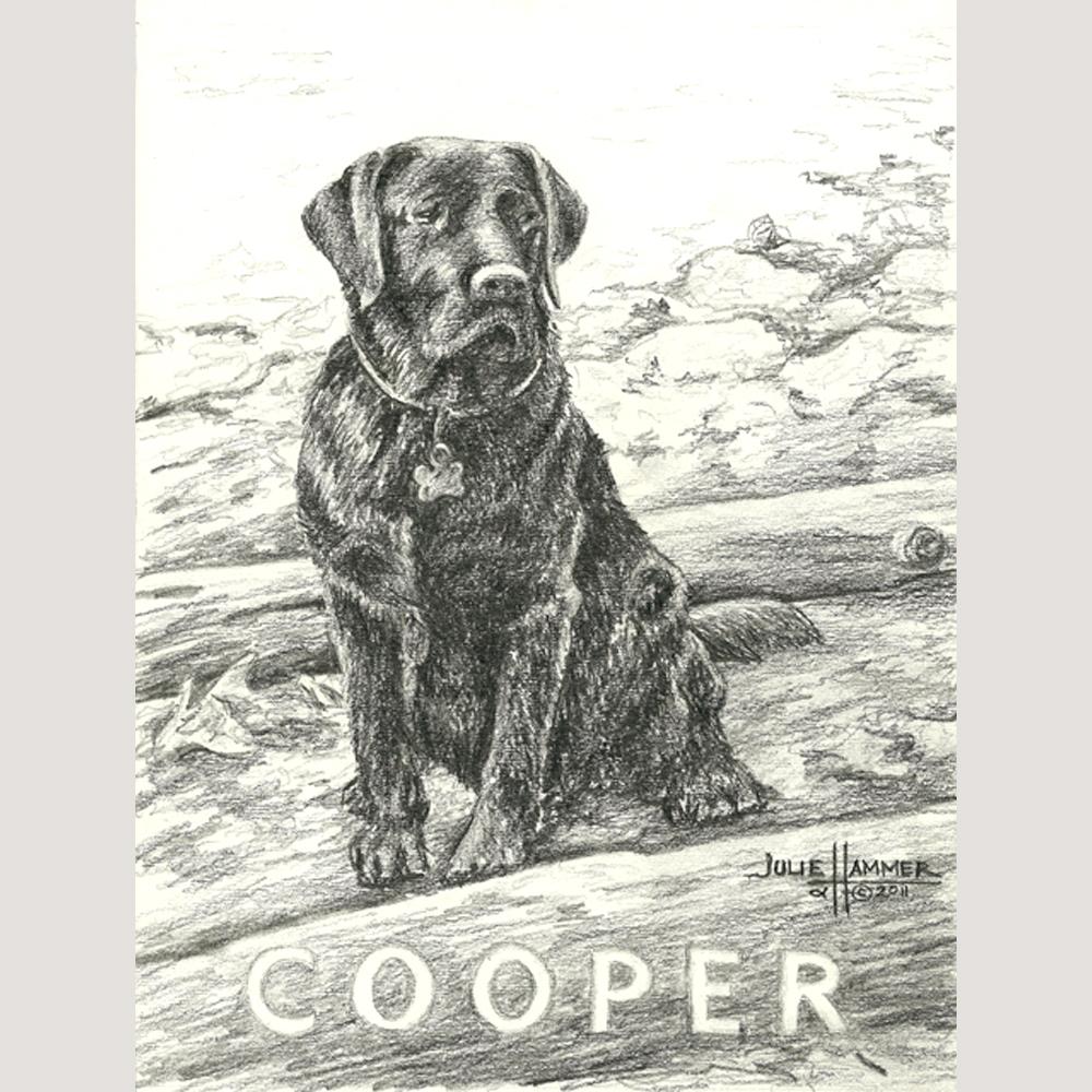 Cooper pencil drawing by Julie Hammer, artist
